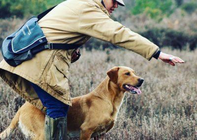 Gun Dog Field Trials Training